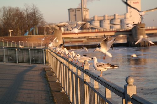 bremen  weser weir  sunset