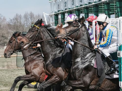 bremer rennverein horse racing the day of the race