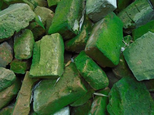 brick pile of bricks moss