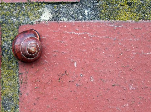 brick snail brown