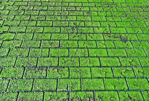 Brick Walkway Background - Green