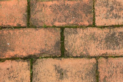 Bricks With Moss