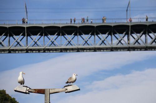 tiltas,žuvėdros,mėlynas,stebėti,mėlynas dangus,paukštis,Litoral,ramybė