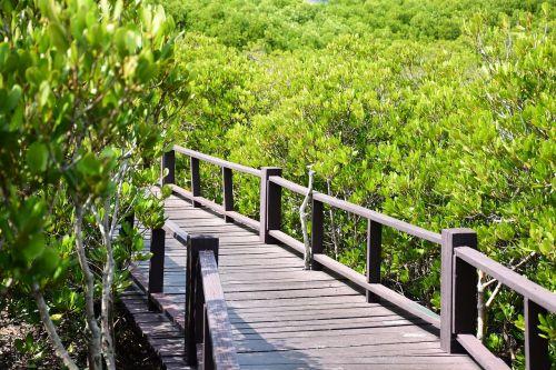 bridge forest thailand