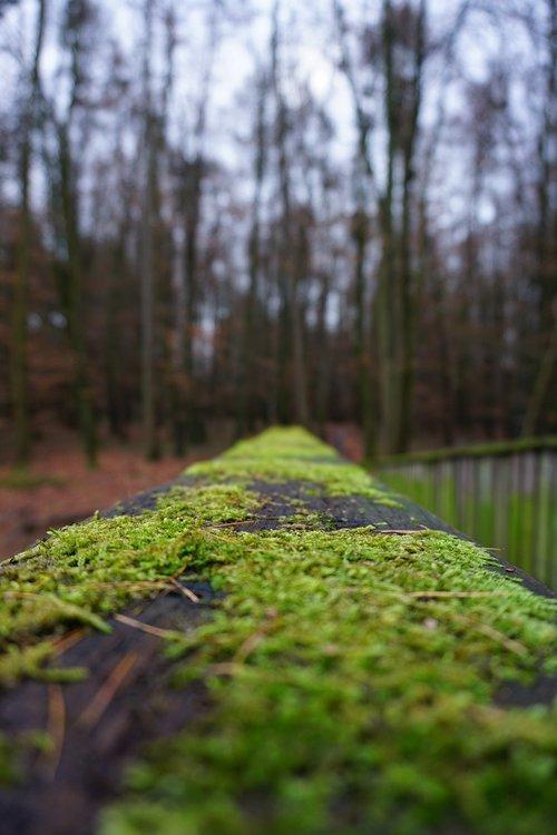 bridge  wood  railing