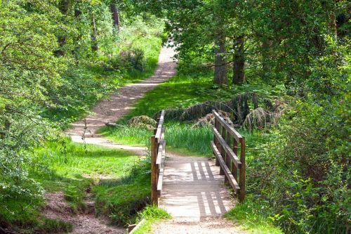 bridge wooden bridge forest