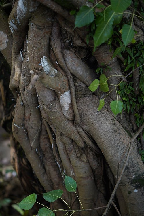 bridge - built structure  root  asia