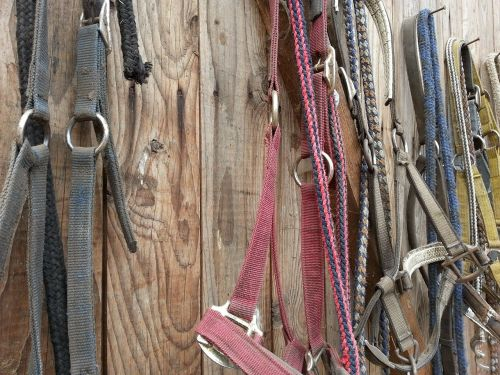 bridle stall horse