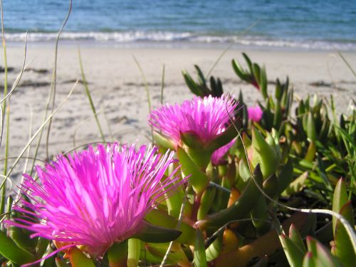 Bright Flowers & Beach