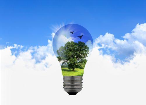 Bright Idea - Quercus
