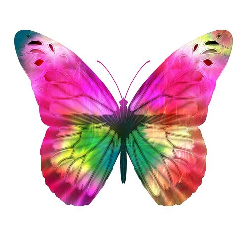Bright Pink Butterfly