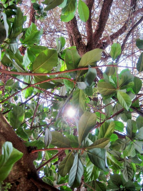 Bright Sun Penetrating Foliage