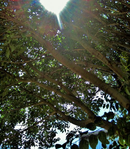 Bright Sun Through Tree