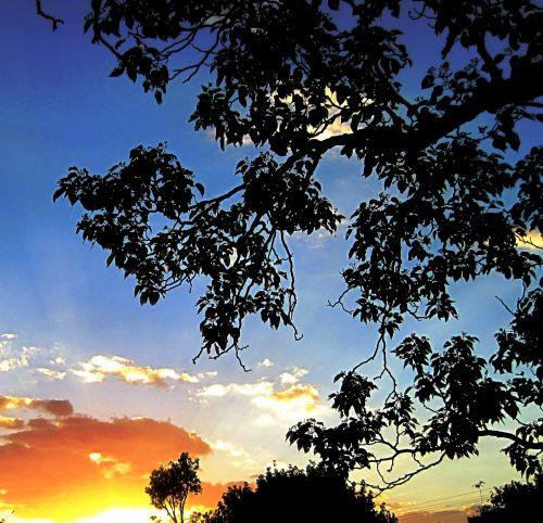 saulėlydis, oranžinė, šviesus, medis, lapija, siluetas, dangus, mėlynas, ryškus saulėlydžio debesys ir žalumynai
