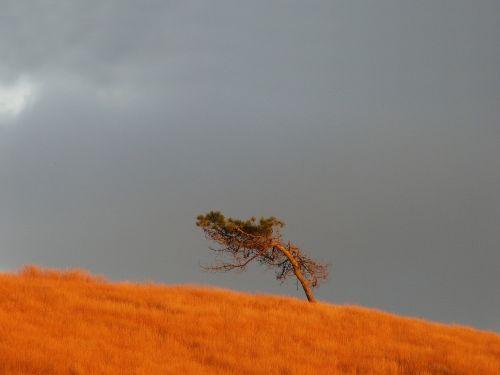 brittany tree unique