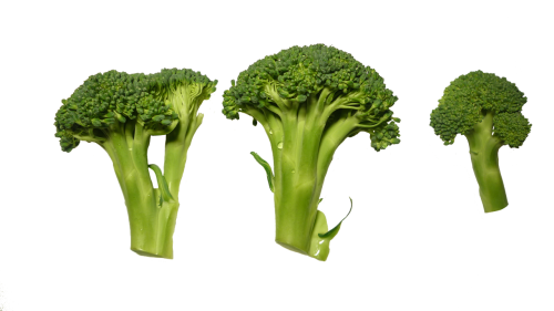 broccoli clippings vegetables