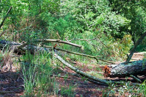 Broken Fallen Tree