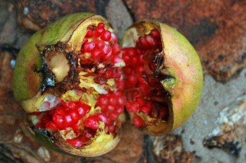 Broken Pomegranate