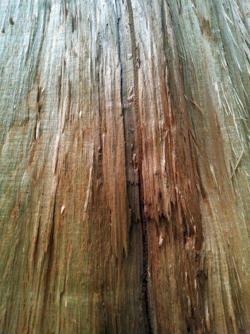 Broken Wood Stem