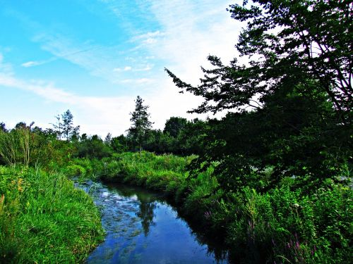 brook water landscape