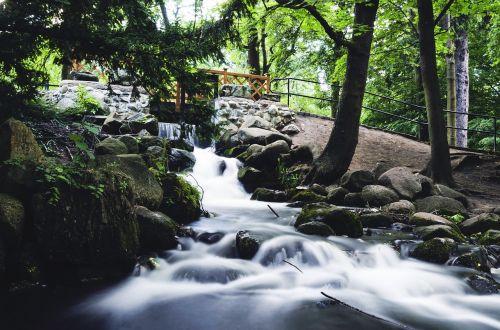 brook park nature