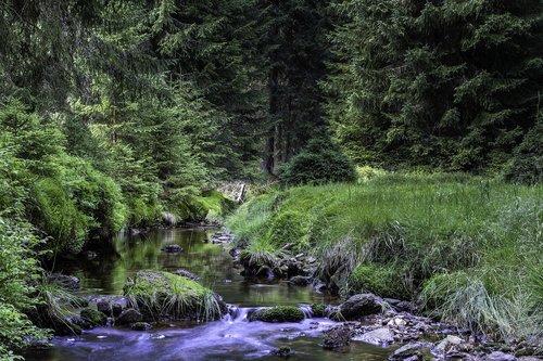 brook  tree  summer