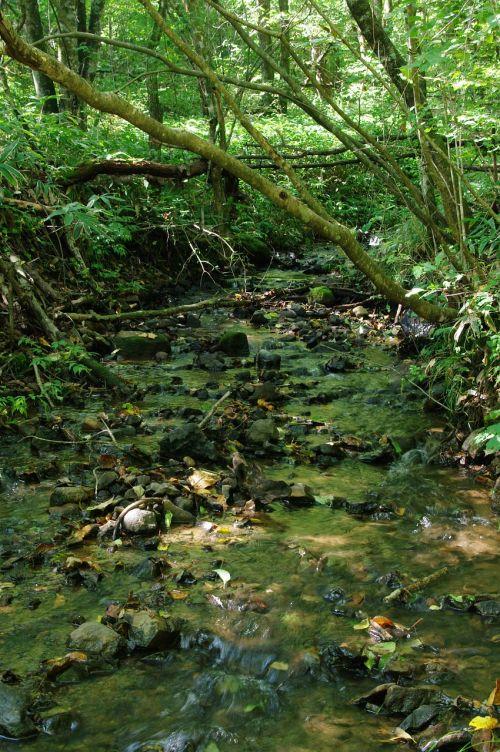 srautas,žalias,skamba,vandens srautas,upės srautas,miškas,gamta,pavasaris