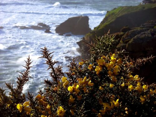 broom coast cliff