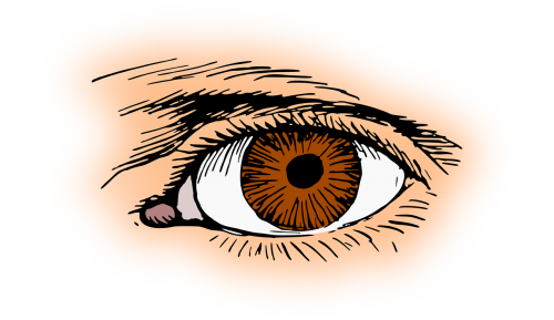 brown eye eyelash
