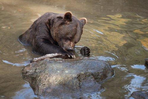 brown bear  teddy bear  eat