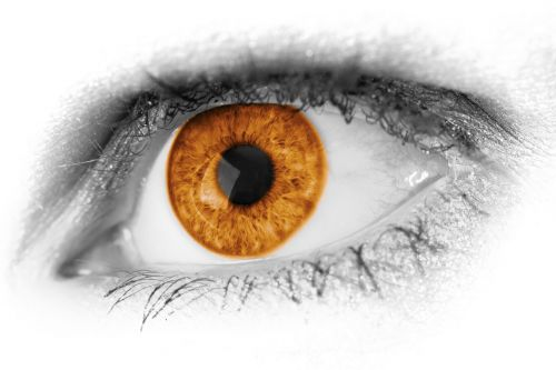 Brown Eye Detail