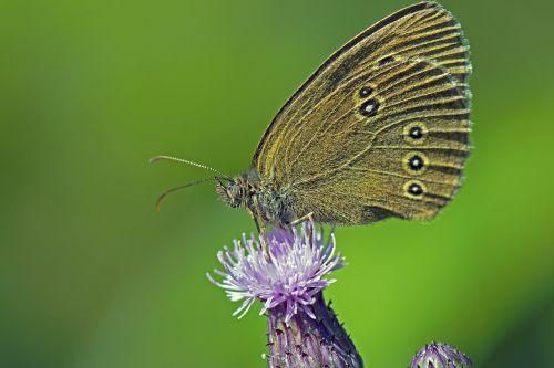 brown forest bird butterflies butterfly