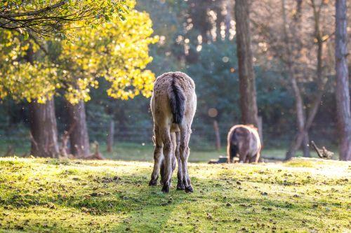 brumby horses wild horses horses