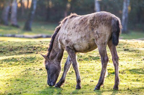 brumby horses wild horses horse herd