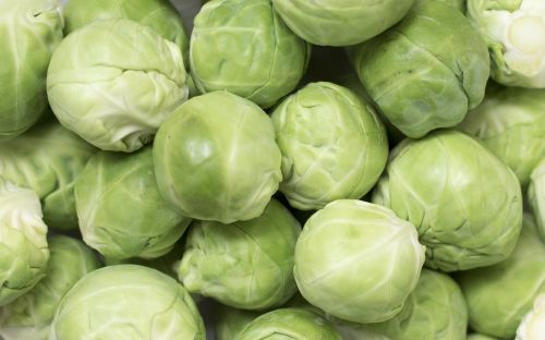 brussels sprouts brussels carbon rosenkoehlchen