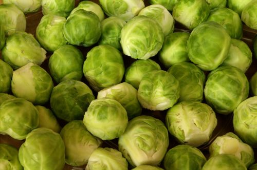 brussels sprouts vegetables rosenkoehlchen