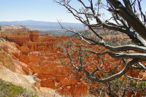 bryce canyon landscape national