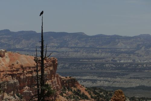 bryce canyon bird wildlife