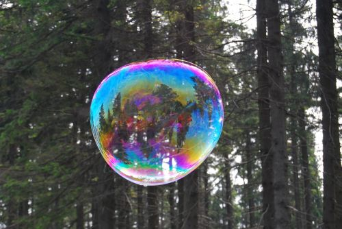 bubble forest lightness