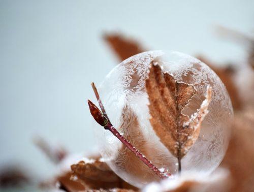 bubble soap bubble frozen