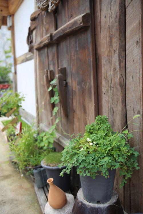 bucheon hanok experience village republic of korea flowers