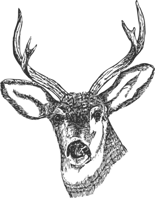 buck head stag