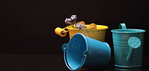 bucket forget me not flower