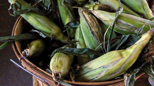 Bucket Of Corn