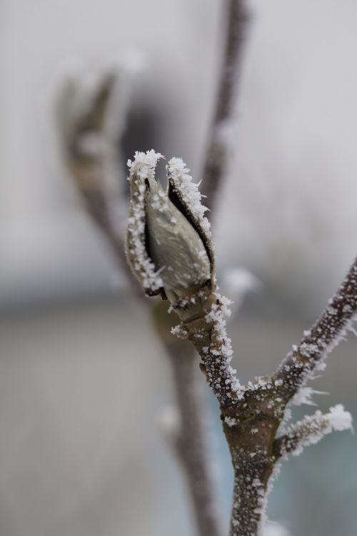 bud ice hoarfrost