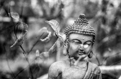 buddha leaf meditation