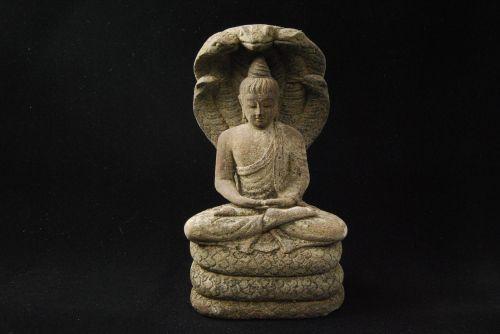 buddha meditate naga