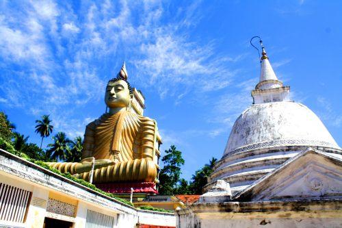 buda,Šri Lanka,statula,religija,budizmas,ceilonas