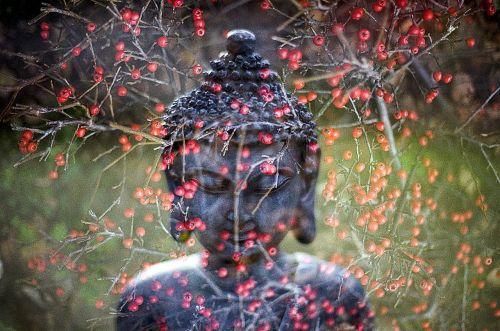 buddha leaf religion