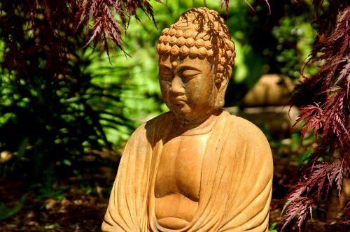 buddha garden japanese maple